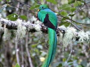 Op zoek naar de magische quetzal