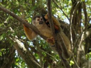 Costa Rica aap