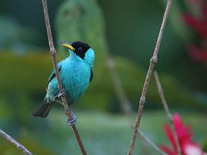 IJsvogels spotten in Cano Negro
