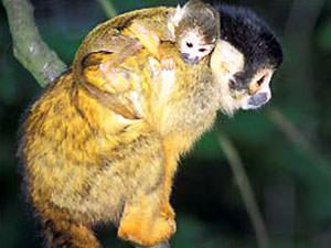 apen spotten tijdens junglewalk