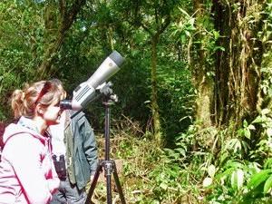Vogels spotten in Monteverde Costa Rica