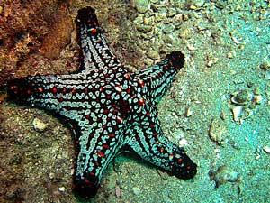 Een stukje onderwaterwereld