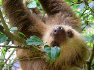 Costa Rica rondreis: luiaard