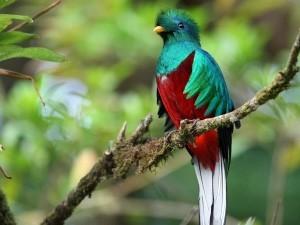 quetzal vogel reizen costa rica