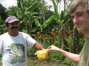 Sarapiqui: tropische ananassen