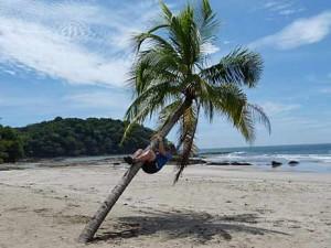 blog-palmboom