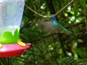 reisblog-kolibrie