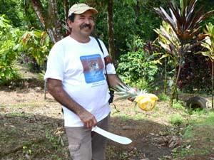 costa-rica-leuke-weetjes-plantage-ananassen