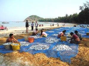 Einheimische trocknen Fische am Ngapali Beach