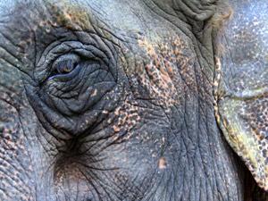 Auge in Auge mit sanften Riesen in Kalaw
