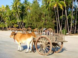 Ochsenkarren am Strand von Ngapali