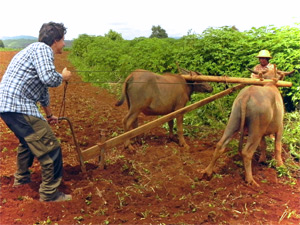 Ein Feld selbst umpflügen bei Hsipaw