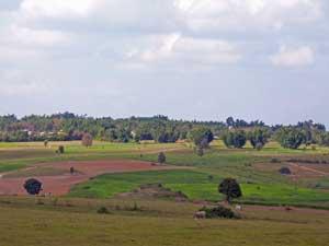 Felder zwischen Kalaw und Inle See