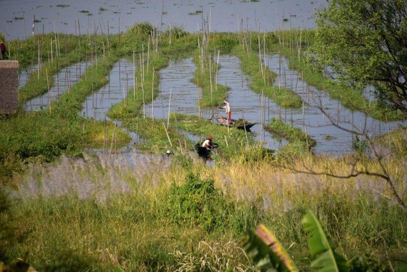 Schwimmende Gärten auf dem Inle-See