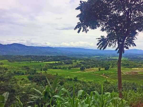 Ausblick auf die Reisfelder in der Umgebung von Keng Tung