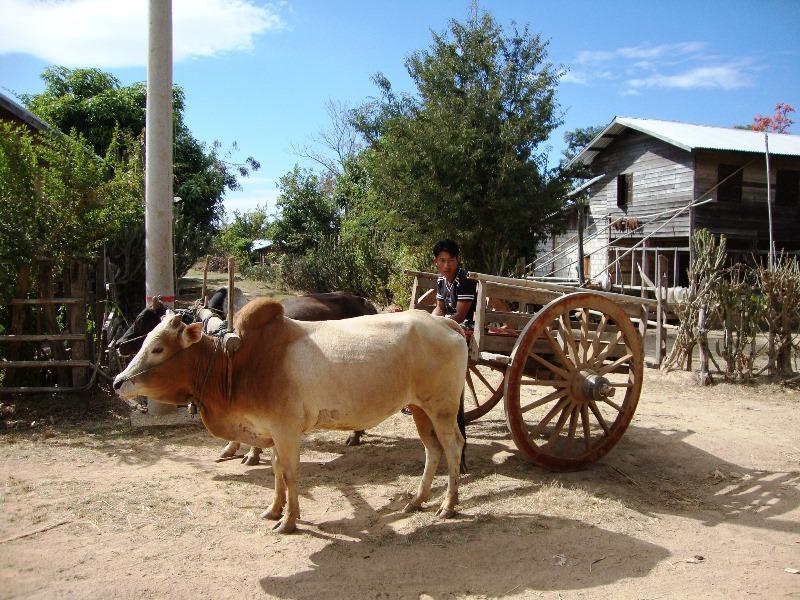 Ochsenkarrenfahrt und am nächsten Tag zu den Langhalsfrauen