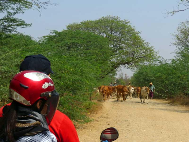 Yangon nach Bagan: Motorradsafari