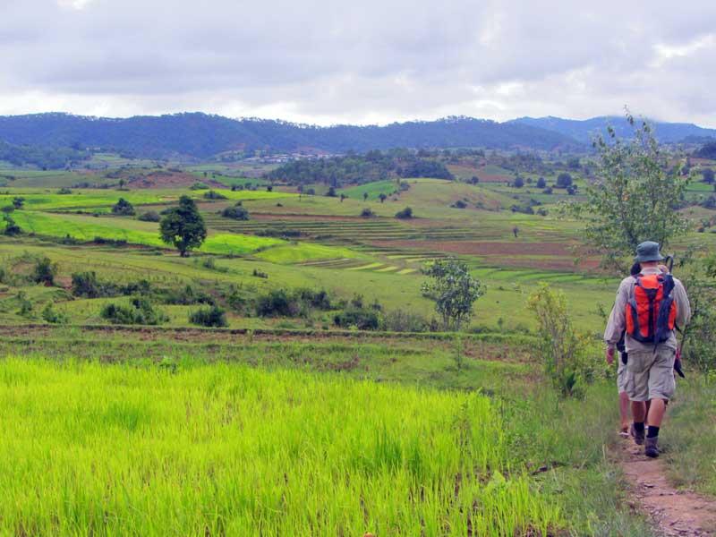Leuchtend grüne Landschaft in der Green Season