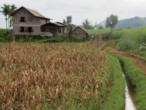Ein Bauernhaus mit Feldern in der Nähe des Inle-Sees