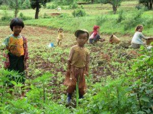 Neugierige Kinder, während die Mütter auf dem Feld arbeiten