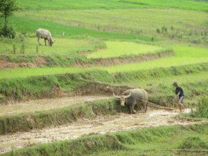traditionelle Landwirtschaft zwischen Kalaw und dem Inle-See
