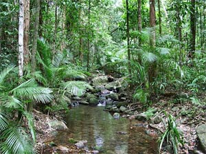 Cape Tribulation Forest