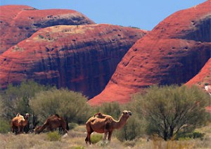 Alice Springs outback Australie