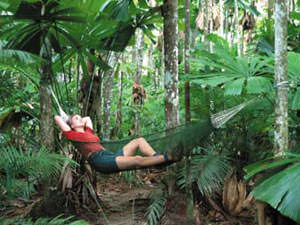 australiereis-capetrip-jungl