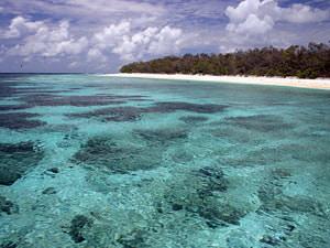 Koralen bij Lady Elliot eiland