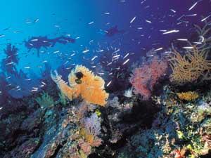 koraal duiken Australie