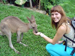 Oostkust selfdrive, kangoeroes
