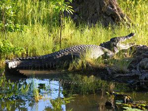 Outback Kakadu krokodil