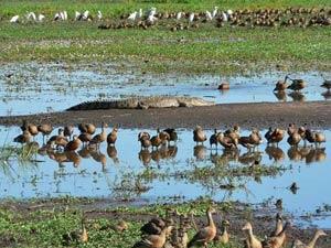 Kakadu Wetlands tijdens je camperreis Australie