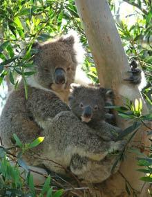 Australie reis, Tasmanie