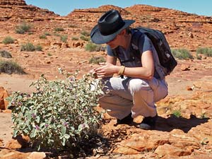 Outback tijdens je camperreis Australie