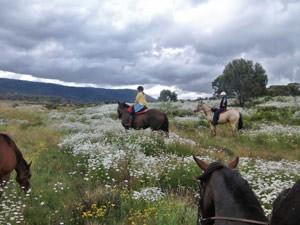 Paardrijden Snowy Mountains