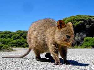 3-weken rondreis Australie