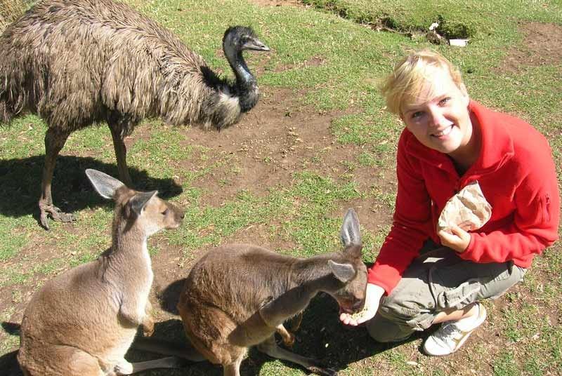Australie vakantie kangaroo