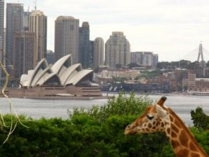Sydney,-Taronga-Zoo opera house