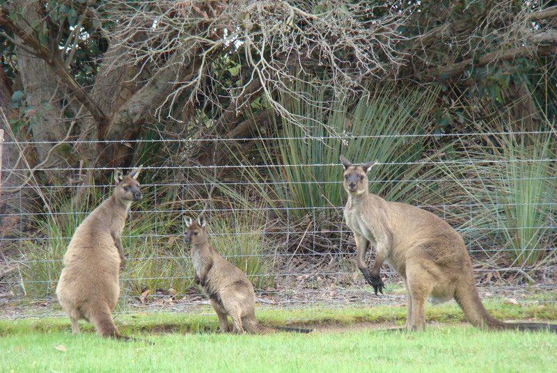 Kangoeroe eilandhopping