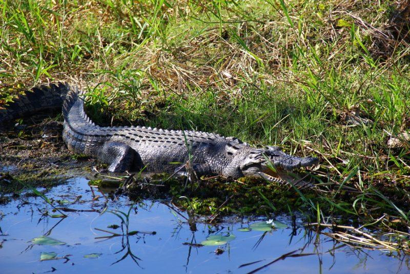 Crocodile Dundee Drive