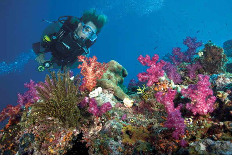 Diving the Great Reef