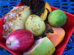 Gezinsreis Australië - fruitfarm