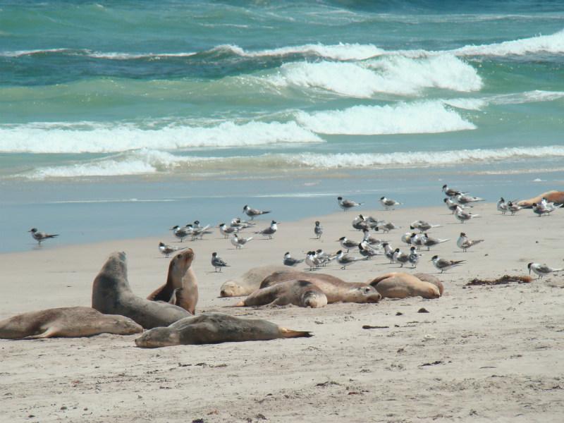 Groepsreis Kangaroo Island