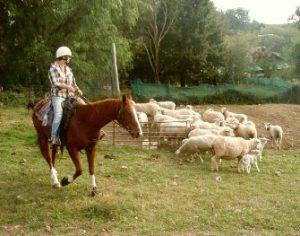 Farmstay activiteit Australie