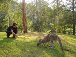 kangoeroes spotten tijdens je groepsreis oostkust Australie