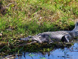 Krokodillen spotten tijdens je groepsreis Noord Australië