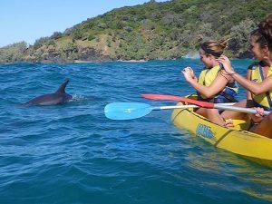 Kajakken met dolfijnen in het Great Sandy National Park