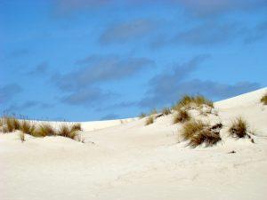 Henty Dunes Tasmanie groepsreis