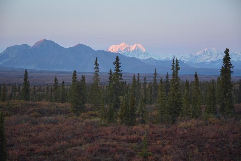 Besuch im Denali Nationalpark bei Alaska Rundreise